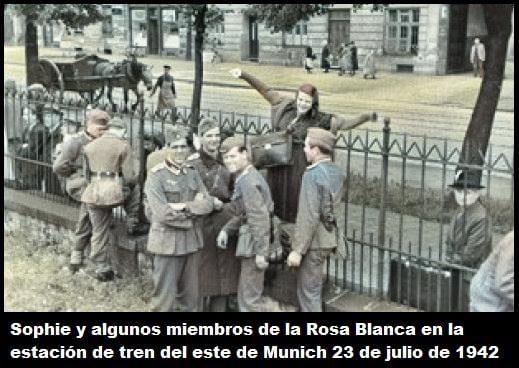 la rosa blanca alemania historia