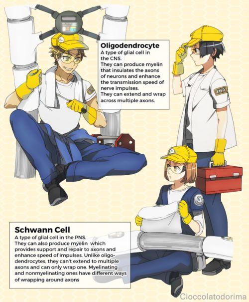 Cells at work anime manga