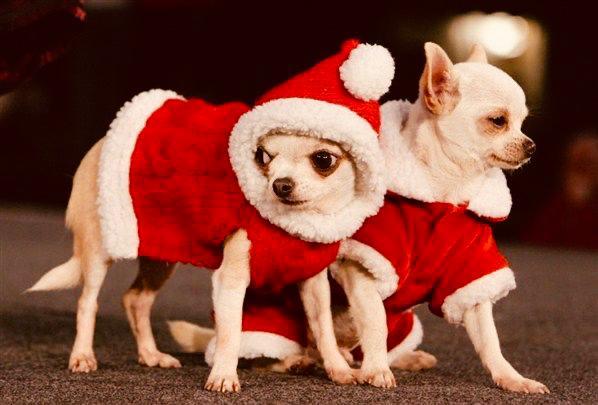 El Chihuahua, icono en la antigüedad. El perro de moda de ayer y hoy. El misterio de su origen.