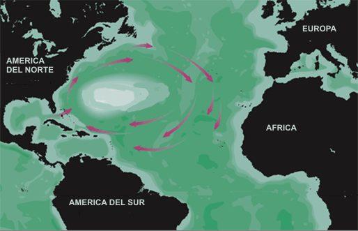 mar de los sargazos profundidad media mapa fotos